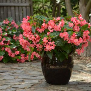 Ideas to help you reap big rewards from your garden