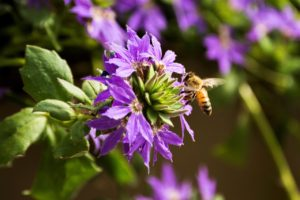 Bee responsible! How to attract pollinators to your garden and help them thrive