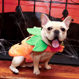 Keep Pets Safe this Halloween