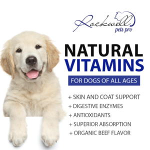 3 Picks to Keep Your Fur-Friends Healthy & Happy This Summer
